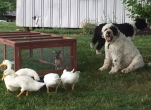 bunny dogs and ducks all together