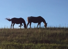 horses-on-hill